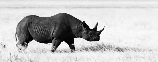 Ngorongoro_Spitzmaulnashorn_edit2